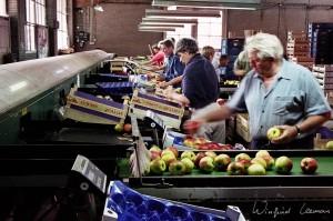 fruitveiling